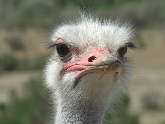 Stop being an ostrich, electronic component shortages are real